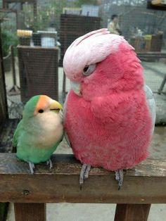 Grote en kleine vogel Funny Birds, Cute Birds, Pretty Birds, Beautiful Birds, Animals Beautiful, Amazing Animals, Animals And Pets, Baby Animals, Funny Animals