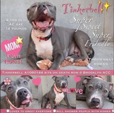 TINKERBELL ON DEATH ROW TODAY - 09/30/16 http://nycdogs.urgentpodr.org/tinkerbell-a1090144/
