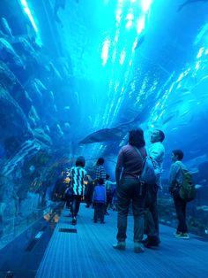 Dubai Aquarium - Dubai