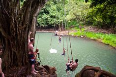 Kipu Falls Rope Swing. My favorite place to jump! Yes! Kauai!! #kipu falls, #kauai, #hawaii