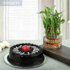 A combination of tasty and lucky gift is here with a delectable Chocolate Truffle cake (half kg) and a two layer lucky bamboo plant. Chocolate Truffle Cake, Chocolate Day, Chocolate Truffles, Delicious Chocolate, Chocolate Lovers, Same Day Delivery Gifts, Mother's Day Gifts Online, Lucky Bamboo Plants, Send Chocolates