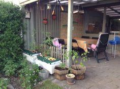 Terrassen og alle tomatplanterne