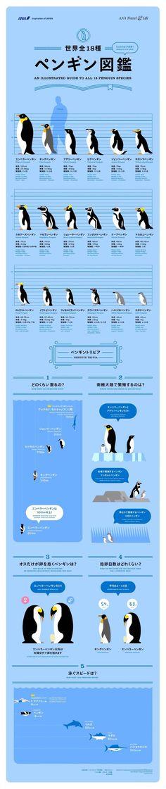 Animals And Pets, Funny Animals, Cute Animals, Penguin Illustration, Animals Information, Elephant Seal, Penguin Art, Marine Biology, Cute Anime Boy