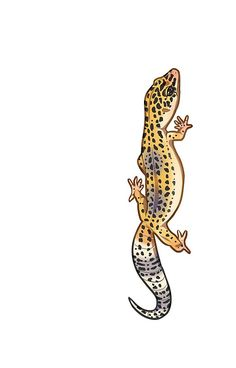 Fastwalking Normal Leopard Gecko - Vertical