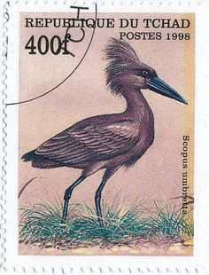 hamerkop on stamps - Google Search