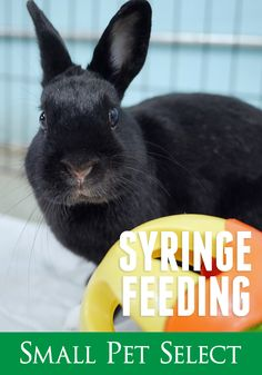 A rabbit who isn't eating will need to be syringe fed. and arguments may ensue. Be patient, tell him he's handsome, and prepare to get a little messy. Guinea Pigs, Rabbits, The Selection, Dog Cat, Bunny, Handsome, Pets, Life