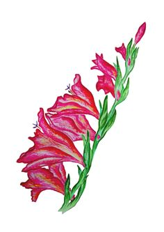 Inspired by memories of Gladiolus fields. Colors, emotions, smell, beauty of nature. Size: or cm. Materials used: watercolors. Floral Artwork, Gladiolus, Selling Art, Lovers Art, Watercolors, Buy Art, A4, Fields, Natural Beauty