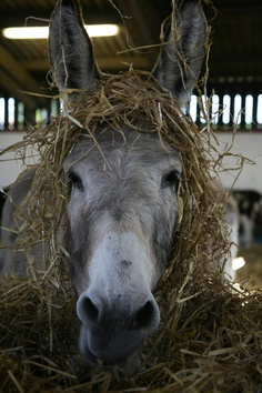 Autumn comes to The Donkey Sanctuary