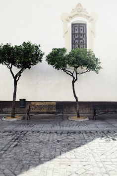 Cadiz, Spain - something about these trees makes me love this picture
