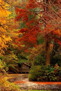 """Forest House, Dandenong Mountains, Australia """" fall colors are so beautiful. My absolute favorite season""""! Beautiful World, Beautiful Places, Beautiful Pictures, Beautiful Scenery, Beautiful Beautiful, Absolutely Stunning, Image Nature, Autumn Scenes, Fall Pictures"""