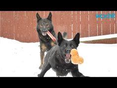german shepherd puppy training on u tube -  Yahoo Video Search Results