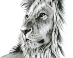 Charcoal Drawing 8x10 ORIGINAL Lion Art Lion by JaclynsStudio