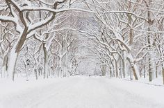 Central Park Mall Snow by Mitchell Funk