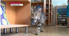 KUZYA THE RUSSIAN LIBRARY CAT A cat walked into the library in Novorossiysk, Russia, and found a home, a job, and stardom.  It wasn't long before (2014.01.01) Kuzya was promoted to assistant librarian, which meant issuing a certificate. It also means Kuzya has to dress up for work -in a fetching bow tie. You can see Kuzya at work on video https://www.youtube.com/watch?v=9GIhPDp6T4Y&feature=youtu.be
