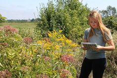 Bee Lab - Amanda reviewing data on bee visits.