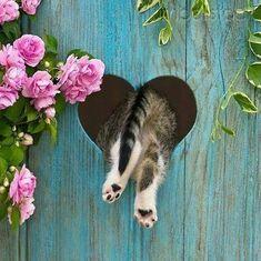 ♥♥♥~je seuis romantique~♥♥♥  http://www.popsci.com/article/science/sorry-cat-haters-science-isnt-your-side