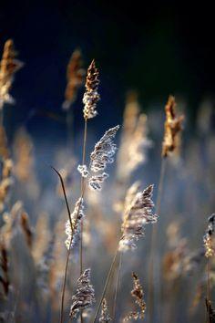 ponderation:  Frosty Weeds by RuudvanderWeel