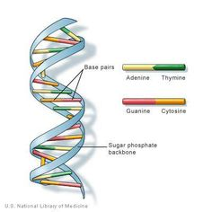 dna...http://www.facebook.com/pages/ABCDAny-Buddy-Can-Do/399580443452428?ref=hl
