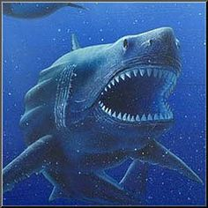 """The Megalodon (pronounced /ˡmɛ.ləˌdɒn/ or MEG-a-la-don; meaning """"big tooth"""" or in Greek as μέγας 'οδόντος) was a giant shark that lived in prehistoric times Largest Great White Shark, Mega Shark, Basking Shark, Shark Facts, Megalodon Shark, In The Zoo, Prehistoric Creatures, Hai, Shark Week"""
