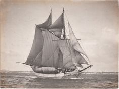 """Early New Zealand Photographers: Henry Winkelmann born 26 September 1860 Bradford, Yorkshire, England died 5 July 1931 Mount Eden, Auckland, New Zealand The scow """"Herald"""" The """"Herald"""" was a wooden vessel of 73 tons register, built at Auckland in 1892, and owned by Mr. A. W. Bryant, coal, lime, cement, and shingle merchant."""