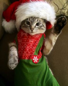 My Cute Christmas Cat :)