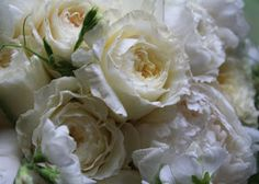 (from patrick) Peony- They can range from white, ivory, cream, blush, even eggshell