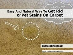 1000 images about clean on pinterest carpets homemade laundry detergent and diy carpet cleaning - Get rid limestone stains ...