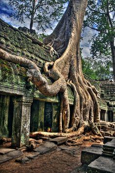 Angkor Wat, Cambodia  O pátio na frente da entrada consiste em uma árvore gigantesca que penetrou as suas barreiras. Antigos espíritos animais moram em sua madeira.
