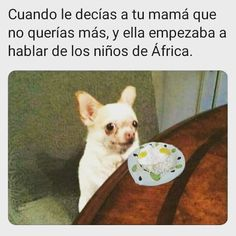 Memes about dogs are excited you're home! Memes Hilariantes, New Memes, Funny Animal Memes, Stupid Funny Memes, Funny Relatable Memes, Funny Animals, Hilarious, Mexican Memes, Funny Spanish Memes