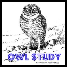Handbook of Nature Study: Outdoor Hour Challenge - Owl Study with free printable owl notebooking page