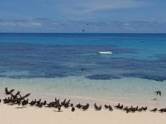 Michaelmas Cay, Great Barrier Reef