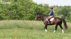 Try these exercises to shake up your riding routine and improve your horse's performance in any sport.