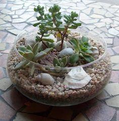 Jardines de cactus y suculentas