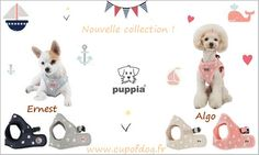 Harnais ERNEST & ALGO PUPPIA https://www.cupofdog.fr/puppia-m-26.html. www.cupofdog.fr