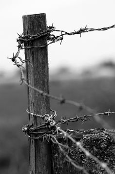 Own picture, Bligny Les Beaune, France Theme: Enclosure- Mélanie Swallow – FENCE Country Fences, Rustic Fence, Barbed Wire Fencing, Wire Fence, Dom Quixote, Types Of Fences, Black And White Aesthetic, Old Fences, Scenery Photography