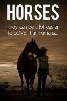 Horses are easier to love