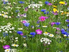 Romantic, colorful and easy to maintain, meadows are also perfect habitats for wildlife. The flowers and grasses will thrive on infertile soil in a sunny site, and they need just one cut each year after the plants have set seed.