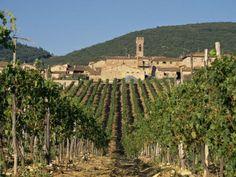 Vineyard …..wow