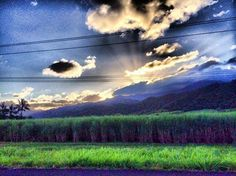 Sunburst over sugarcane, Tropical North Queensland this afternoon. Is it time for a holiday?