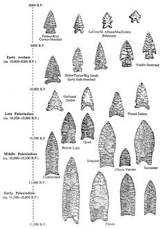 Different types of Projectile points, from the Paleo-Indian periods in the south eastern United States. Wikipedia Clovis People, Native American Tools, Native American Artifacts, Native American History, Native American Indians, Clovis Point, Native Indian, Native Art, Ancient Artifacts
