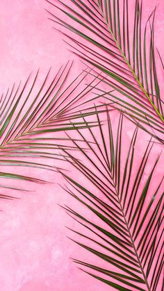 Pretty Wallpapers Backgrounds For iPhone: Pink Palm tree wallpaper backgrounds for iphone Tumblr Wallpaper, Pink Wallpaper Iphone, New Wallpaper, Screen Wallpaper, Wallpaper Quotes, Wallpaper Plants, Pink Wallpaper Backgrounds, Mobile Wallpaper, Motivational Wallpaper