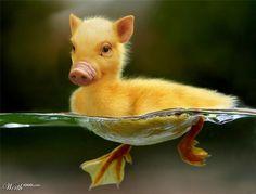Piguck - Worth1000 Contests