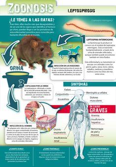 Zoonosis ocasionadas por roedores - Investigación y Desarrollo