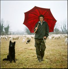Italian shepherd, dog, sheep, goat. Caterina de Boni. Tesis, Pordenone, Italy. photo by giancarlo rado