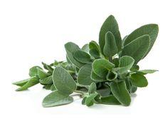 Salvia a foglia larga - Fresco Aroma Salvia Officinalis, Healthy Herbs, Puerto Rican Recipes, Superfoods, Houseplants, Cactus Plants, Fresco, Green Colors, Gardens