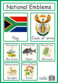 CLIPART WALLPAPER BLINK - Springbok Clipart national animal south africa 17 - 337 X 480 for Android, Windows, Mac and Xbox South Africa Tattoo, Africa Tattoos, National Symbols, National Flag, Africa Craft, South African Flag, Flag Template, Geography Lessons