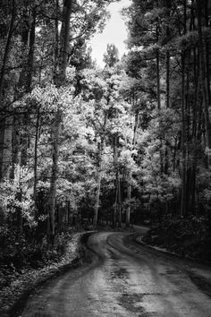 Hey, I found this really awesome Etsy listing at https://www.etsy.com/listing/207722061/aspen-trees-aspens-road-bw-trees-winding