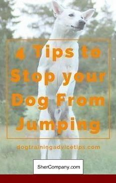 How To Train A Dog To Attack In Hindi Dog Puppytraining