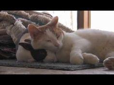 Un gato y un conejo se regalan su amor