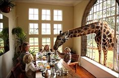 My dad used to tease me at the dinner table that there was a giraffe behind me at the window.  This is exactly what I imagined!